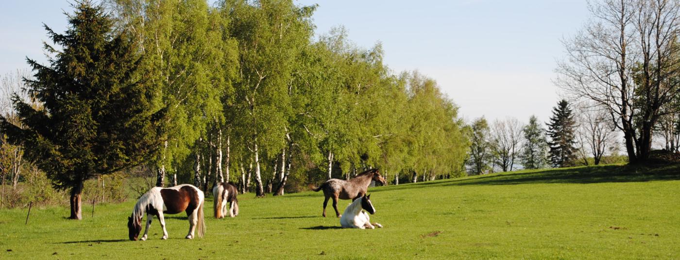koně Rychlebské hory